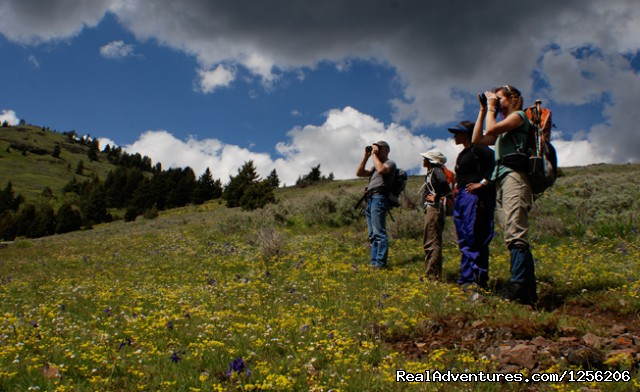 Spotting wildlife on a guided hike at Mountain Sky. (#2 of 5) - Mountain Sky Guest Ranch