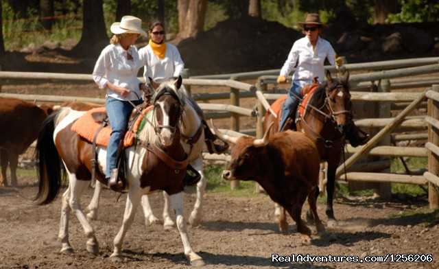 Team Penning - Mountain Sky Guest Ranch