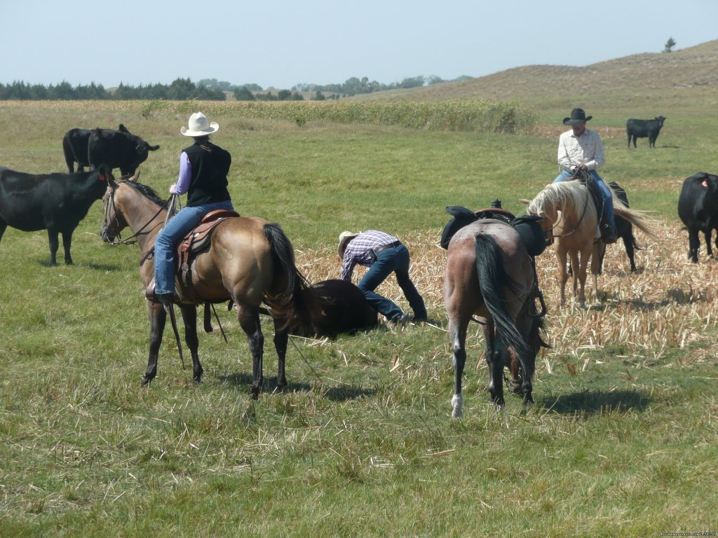 Doctoring in the pasture | Image #2/8 | Working Cattle Ranch Vacation At Rowse's 1+1 Ranch