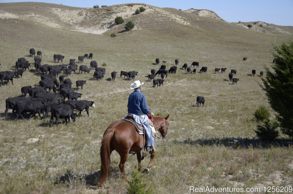 Image #4/8 | Working Cattle Ranch Vacation At Rowse's 1+1 Ranch