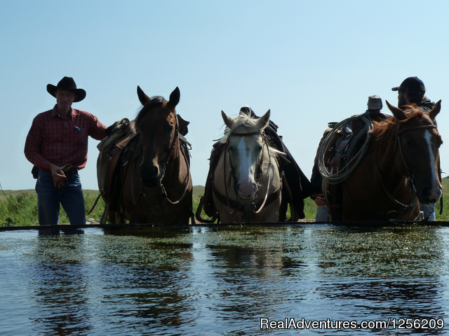 Working Cattle Ranch Vacation At Rowse's 1+1 Ranch Dude Ranch Burwell, Nebraska