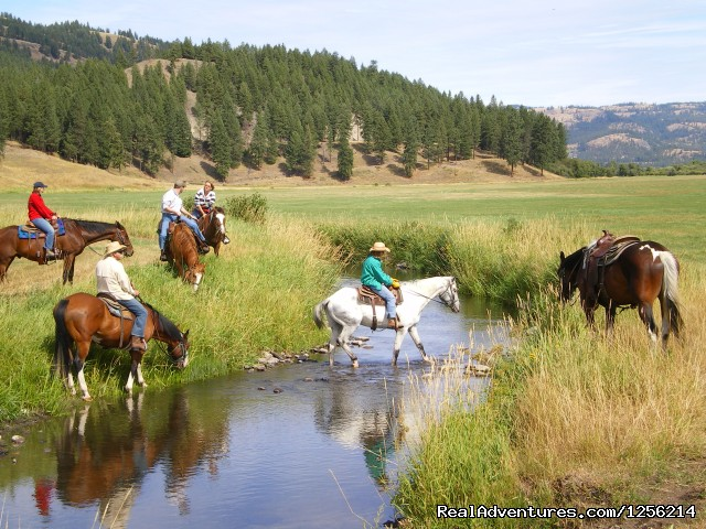 K Diamond K Ranch: Horseback Riding In The Meadow
