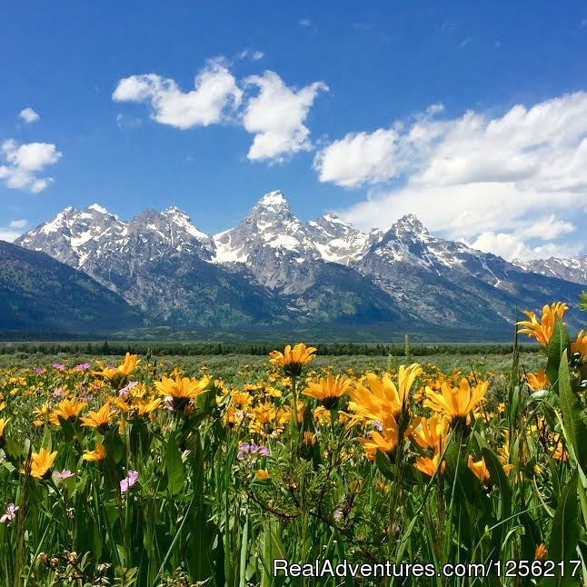 Wildflowers During the Summer | Image #2/5 | Gros Ventre River Ranch