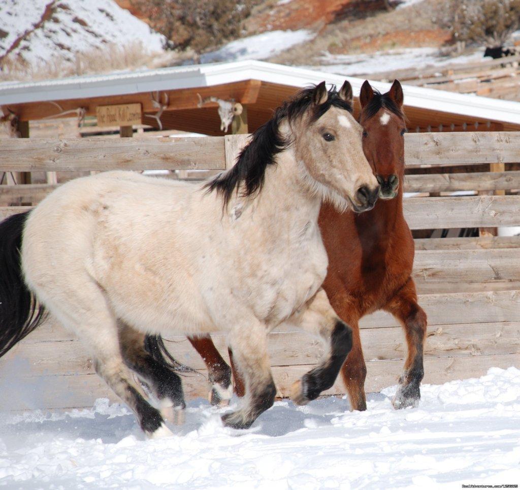 Kiddy Horses | Image #16/24 | Incredible experience at Red Reflet Guest Ranch