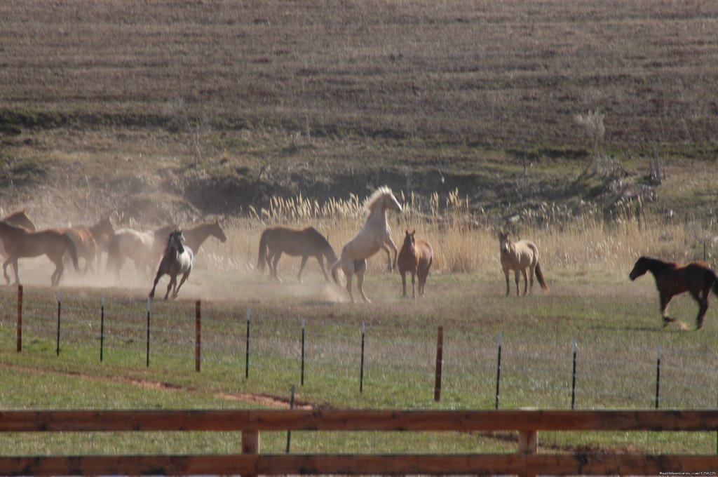 Herd of Horses | Image #19/24 | Incredible experience at Red Reflet Guest Ranch