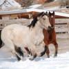 Kiddy Horses