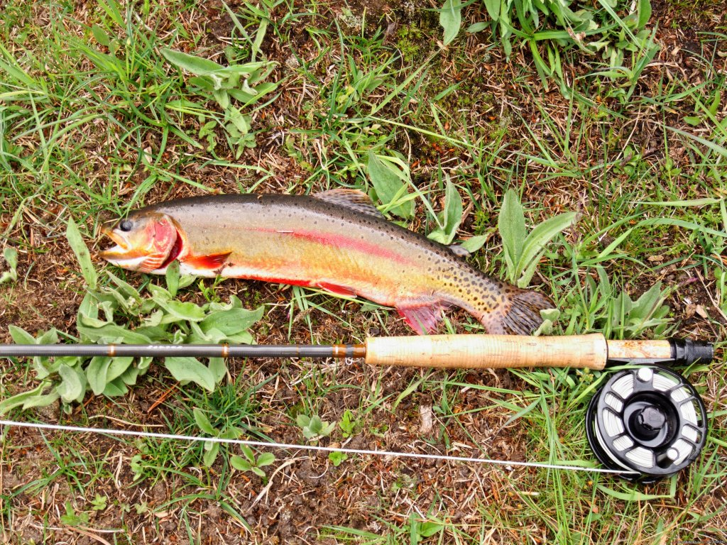 Nice Golden trout