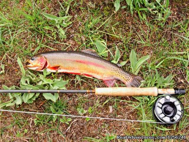 Nice Golden trout - Mule Shoe Outfitters