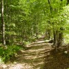 National Forest Walks and Hikes