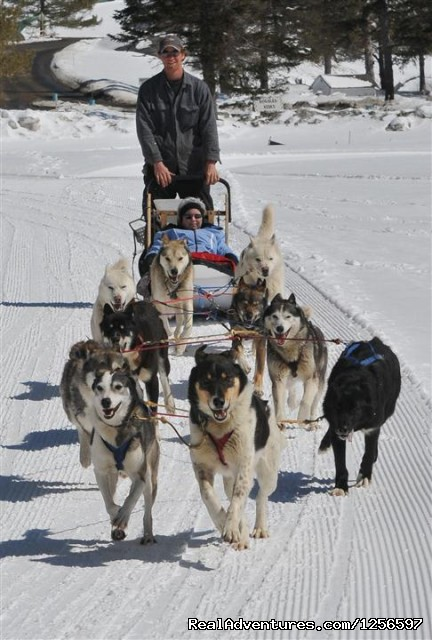 Winter Dog Sledding Rides With Muddy Paw Sled Dog Kennel - Muddy Paw Sled Dog Kennel & Raft NH