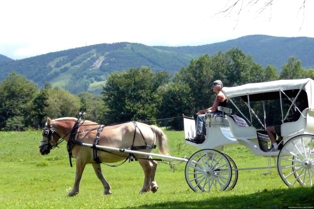 45 min. Carriage Rides | Image #5/7 | Carriage/Sleigh Ride w/ Vacation Rental Home