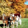 Fall Carriage Rides- Farm by the River B&B with Stables