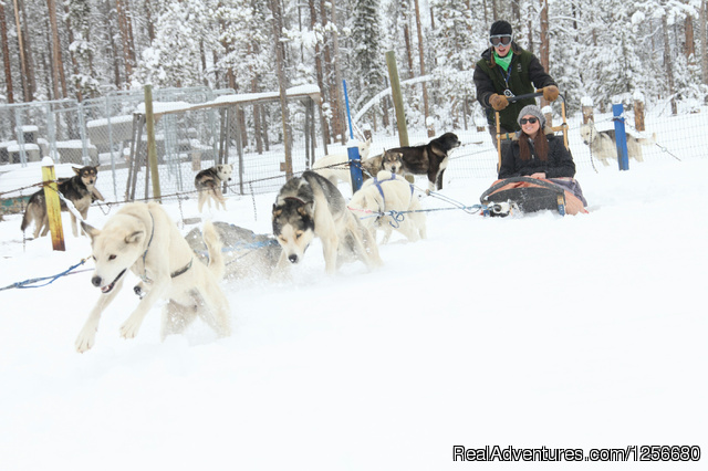 A sled leaving for a great trip through the woods. - Dog Sled Rides of Winter Park