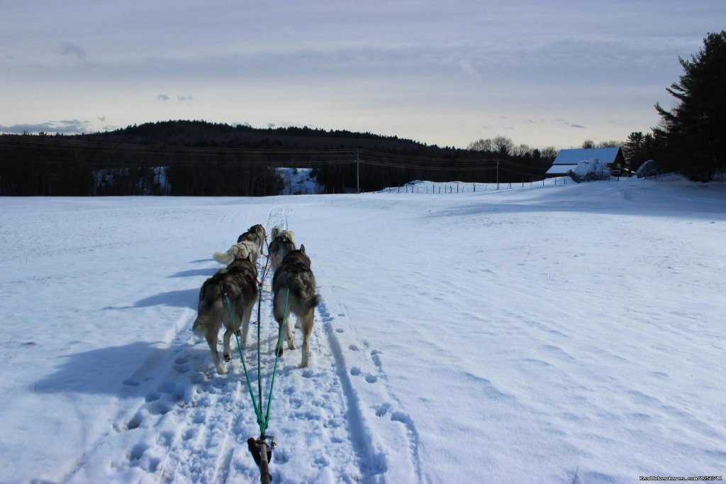 A simple and gorgeous view | Image #8/11 | Barking Brook Sled Dog Adventures llc