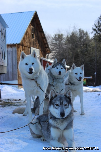 Barking Brook Sled Dog Adventures llc Dog Sledding New Hampshire