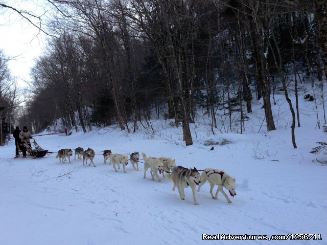 Team Turning - Barking Brook Sled Dog Adventures llc