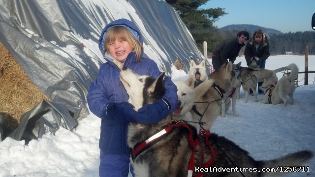 Emma and Twinkle the Lead Dog - Barking Brook Sled Dog Adventures llc