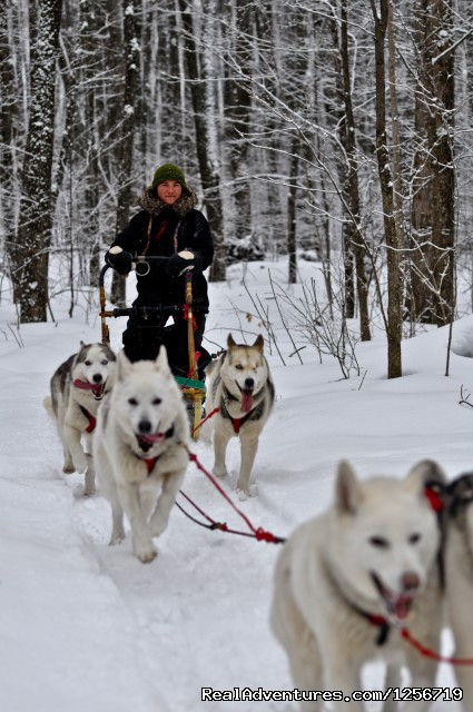 Drive your own team - Wolfsong Adventures in Mushing Dog Sledding Trips