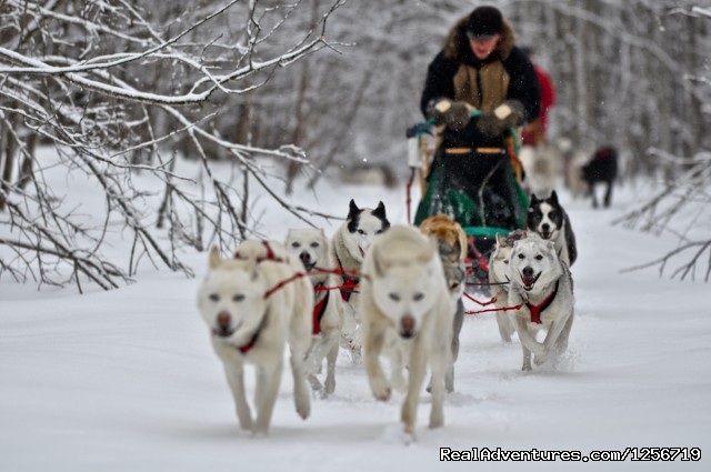 Mush - Wolfsong Adventures in Mushing Dog Sledding Trips