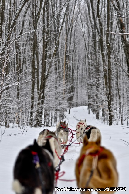 Out on the trail - Wolfsong Adventures in Mushing Dog Sledding Trips