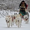 Wolfsong Adventures in Mushing Dog Sledding Trips
