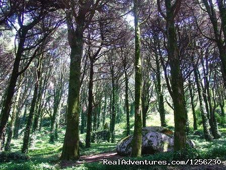 Image #23 of 26 - Portugal Hike: Sintra-Cascais Walking