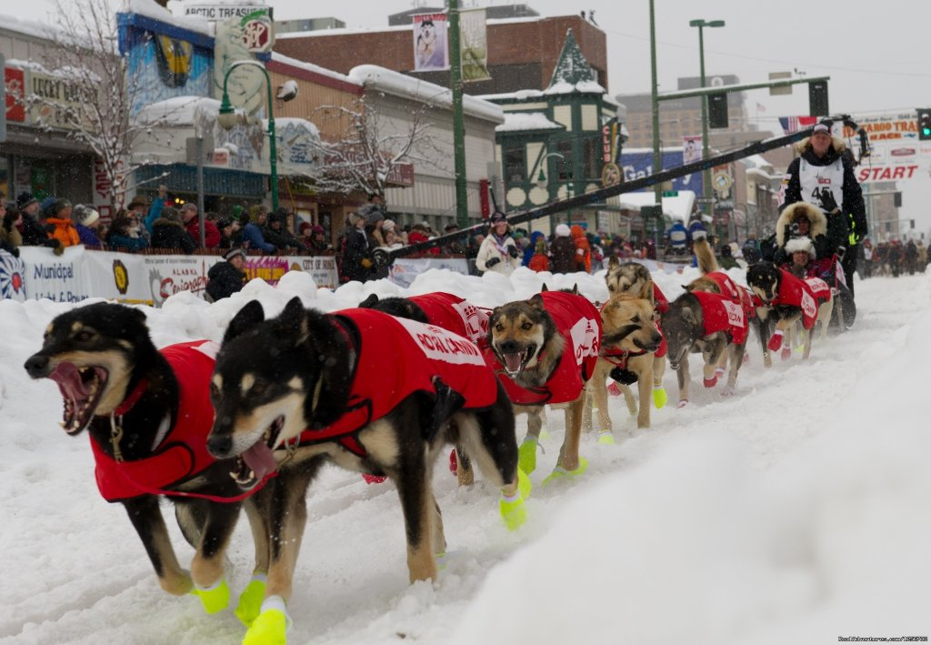 2012 Iditarod Team | Image #2/10 | Nature's Kennel Sled Dog Racing and Adventures