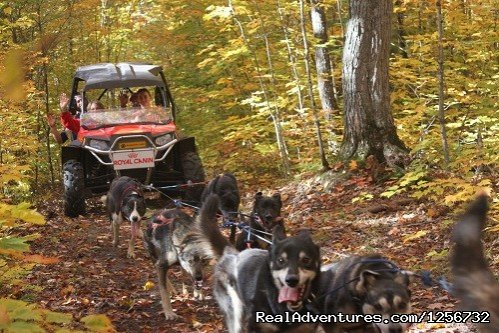 Fall Color Tours | Image #10/10 | Nature's Kennel Sled Dog Racing and Adventures