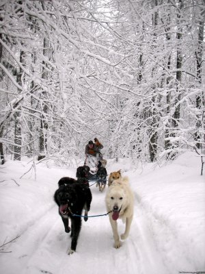 Nature's Kennel Sled Dog Racing and Adventures McMillan, Michigan Dog Sledding