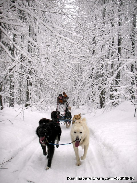Drive your own Team - Nature's Kennel Sled Dog Racing and Adventures