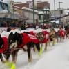 2012 Iditarod Team