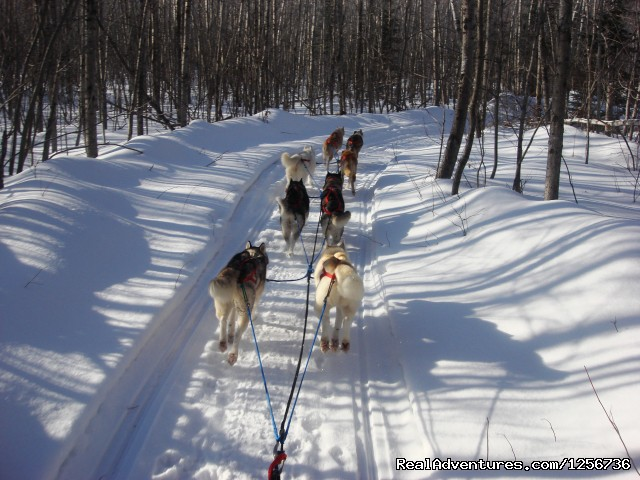 - Snowy Plains Sled Dog Rides & Adventures