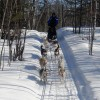 Snowy Plains Sled Dog Rides & Adventures Dog Sledding Michigan