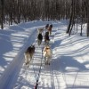 Snowy Plains Sled Dog Rides & Adventures