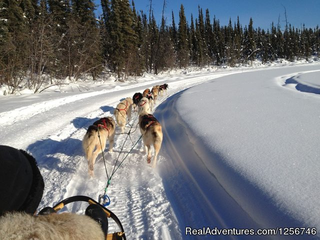 Muzzys Place Dog Sledding Alaska