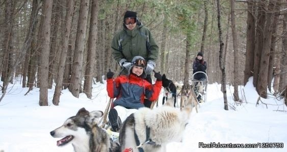 Dogsledding | Image #2/4 | Ride a dogsled through a forest white with snow