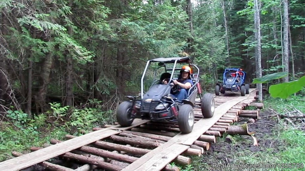 Off Road Dune Buggy tours | Image #3/4 | Ride a dogsled through a forest white with snow