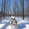 Windrift Dogsledding & Off Road Dune Buggy Tours Orillia, Ontario Dog Sledding