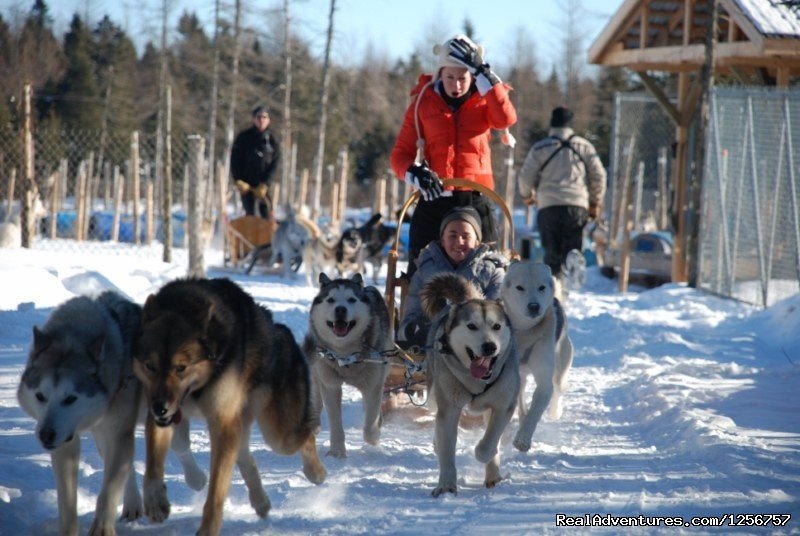 Chenil la Poursuite St-Nicolas, Quebec  Dog Sledding