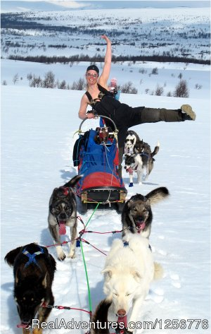 The Silent Way Nordic Wilderness Adventures Umnas, Sweden Dog Sledding