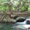 Riverside Glamping in Dominica La Plaine, Dominica Bed & Breakfasts