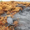 Riverside lodge : Baby turtle