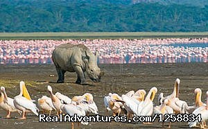 Tsavo Safaris,Air Safaris,Masai Mara Safaris,Mombasa Safari - Mountain Climbing & Gorilla Trekking Safaris