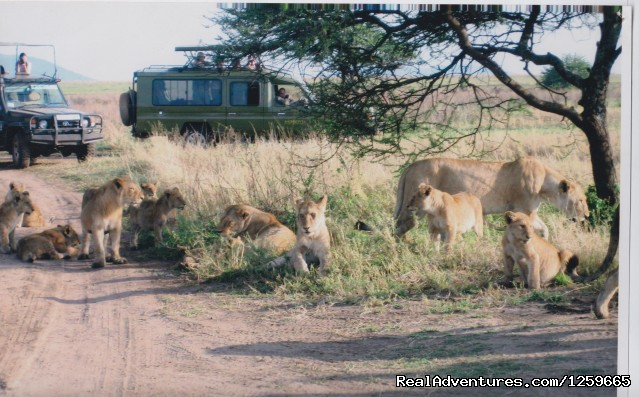 Tanzania Safari - Africa Smart Safaris Limited