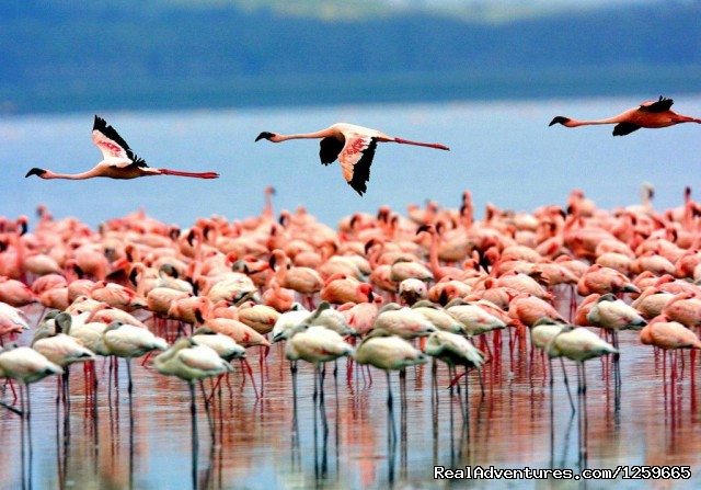 Flamingoes - Africa Smart Safaris Limited