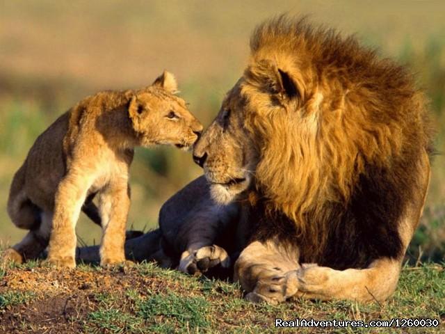 Safaris In Kenya & Tanzania masai mara