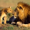 Safaris In Kenya & Tanzania Wildlife & Safari Tours Kenya