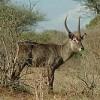 Mombasa Masai Mara Safaris, Tsavo Safaris, Ambosel