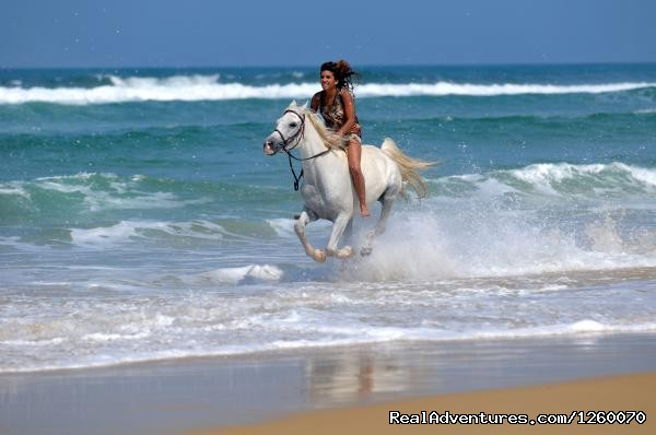 Gallop at the beach - Ocean-Beach Riding Holidays of a different Kind