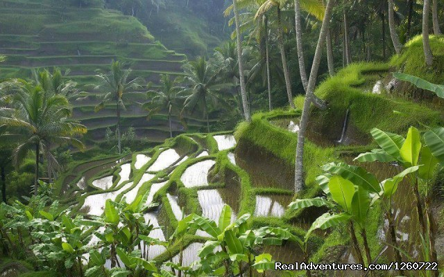 Kerala Hill Stations - Kerala Holiday Packages - Best Deal for Kerala